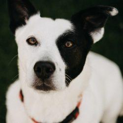 Lost Pet Resources Edmonton